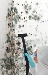 Black-Mold-Remediation-Spring